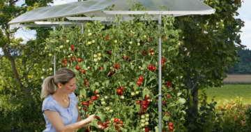 Beckmann KG PSN1 Schutzdach für Pflanzen