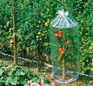 Gärtner Pötschke Tomatenhauben
