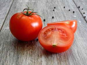 Frische Tomaten aus dem Tomatenhaus ernten