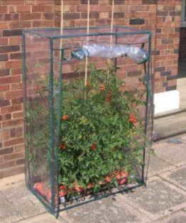 Gewächshaus für Tomatenanzucht Tomatengewächshaus Tomaten - 1